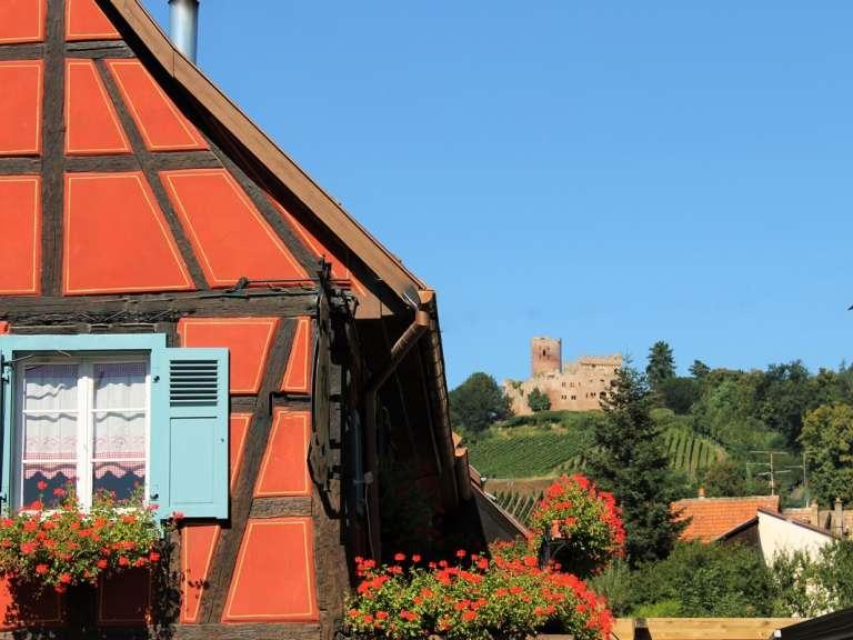 le-chateau-de-kintzheim-volerie-des-aigles-shkt-768x576