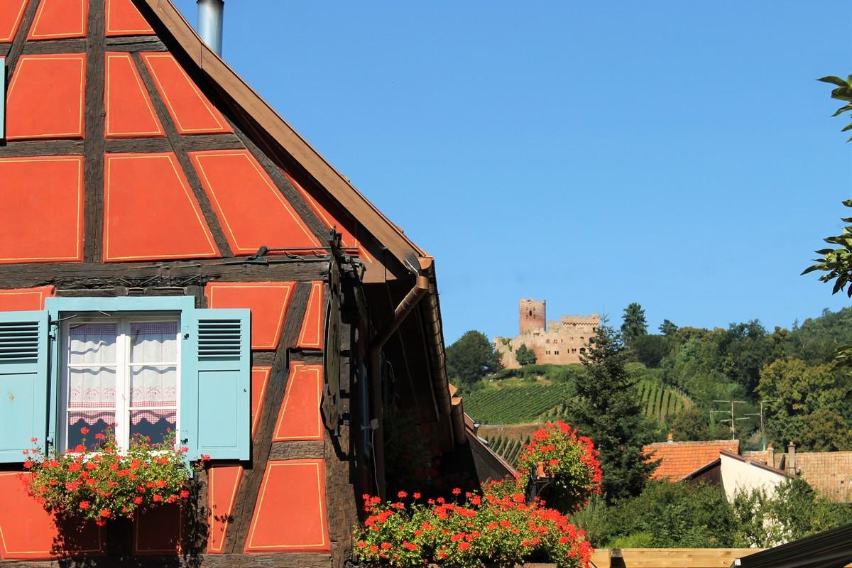 le-chateau-de-kintzheim-volerie-des-aigles-shkt