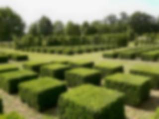 phpdzee9p-jardin-le-bouquet-parterre